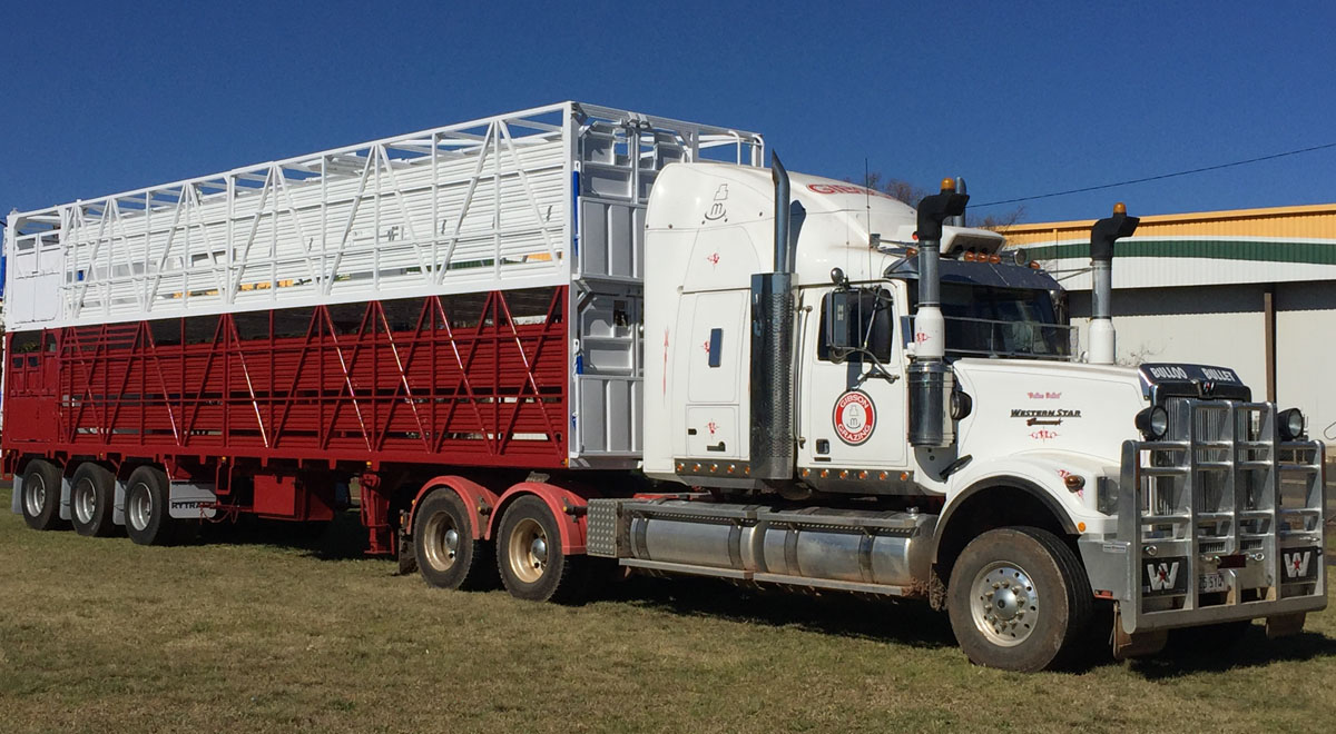 Rytrans Refurbished Cattle Trailer